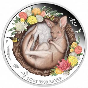 Stříbrná mince Spící mláďata - klokan 1/2 oz proof 2021