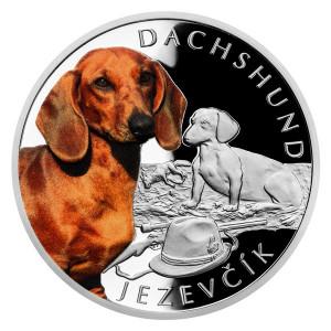 Stříbrná mince Psí plemena - Jezevčík 1 oz proof, kolorovaná 2021